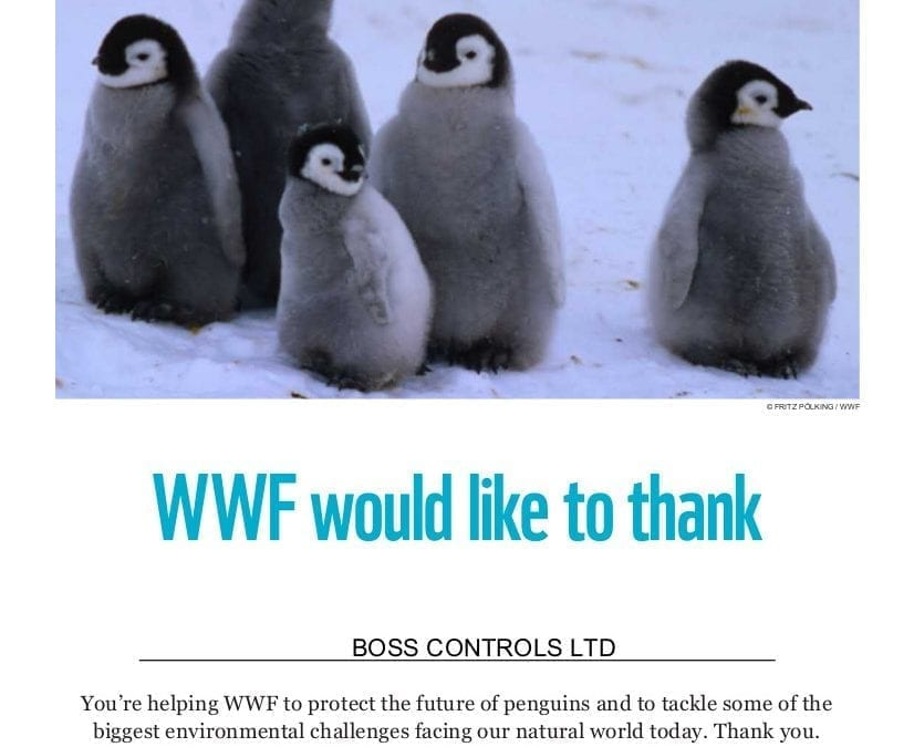 Boss Controls adopts an Adélie Penguin via WWF as part of its Corporate Social Responsibility Strategy